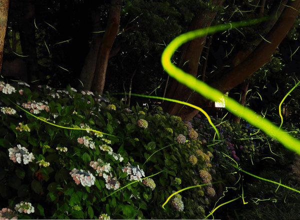 http://www.musashiichinomiya-hikawa.or.jp/news/img/hotarusyuin-1.jpg